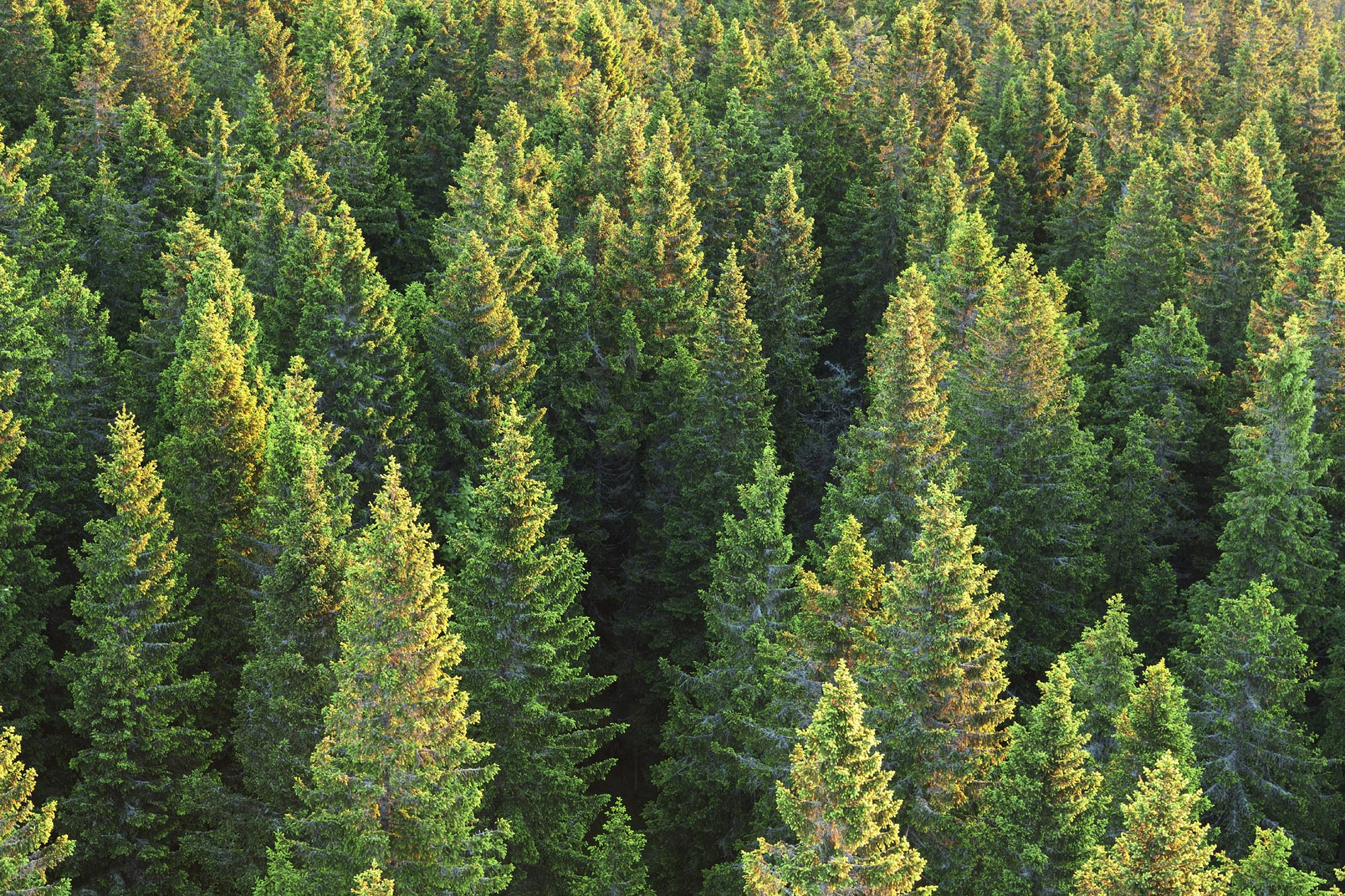På Qvarnsjö Skogstjänster AB hjälper vi dig med skoglig skötsel. Allt från taxering, röjning, trädfällning, gallring och plantering.